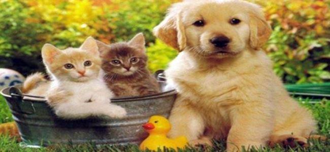 Demirsöz: Bakamayacağınız hayvanları asla almayın!