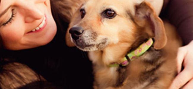 Bu Köpekler Sahiplerinin Hayatını Kurtardı!