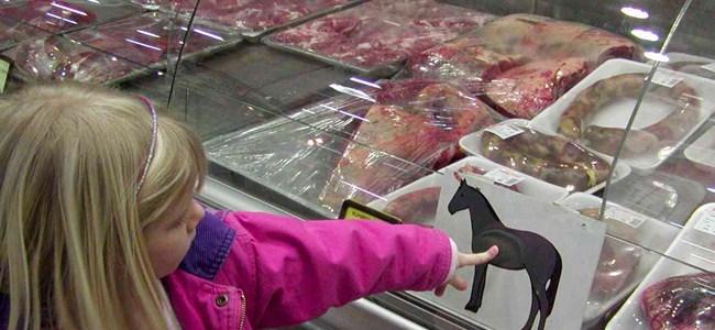 291 bin 800 kilo at eti ithal edildi