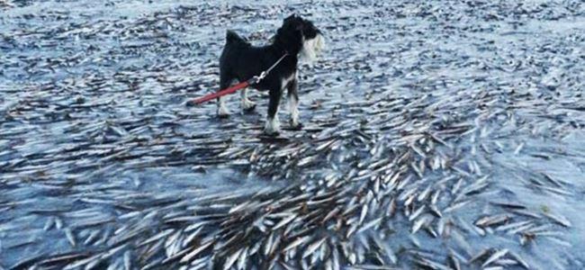 Binlerce balık dondu!
