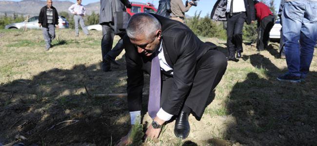 Cumhuriyet Meclisi ormanına 250 fıstık çamı dikildi