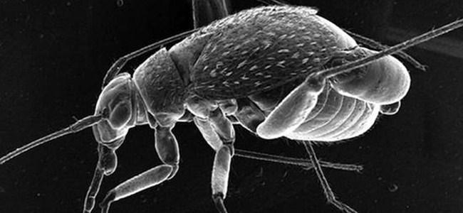 Böceklere özel 'uzay giysisi'