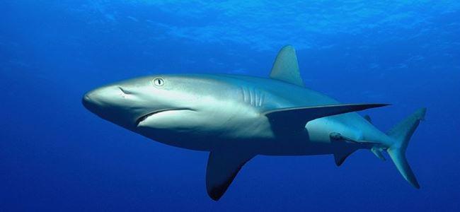 Photo of Türkiye'de köpek balığı ve vatos avcılığı yasaklandı