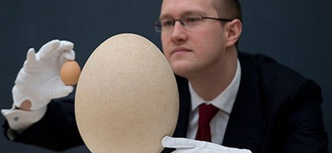 Bu yumurta tam 102 bin dolar