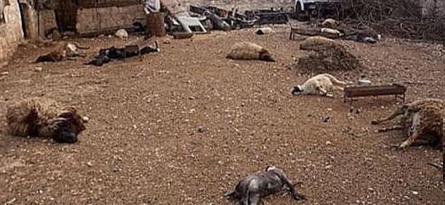 Esad Ordusu Dünya'yı Dehşete Düşürdü