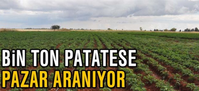Bin ton patatese pazar aranıyor