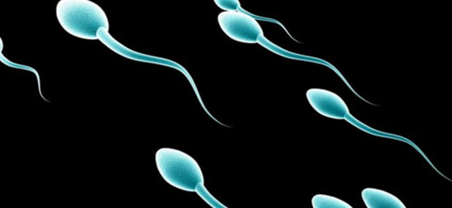 Photo of Spermi olmayan erkekte kök hücre umudu