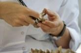 Kimlik tespiti sırasında dedelerinin kalıntılarıyla karşılaştılar