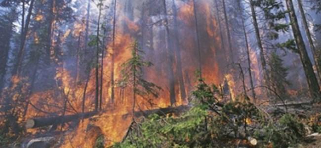 Tarla ve ağaçlar yandı