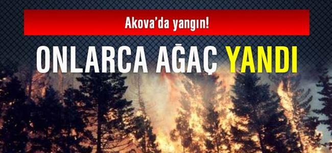 Onlarca ağaç yandı!