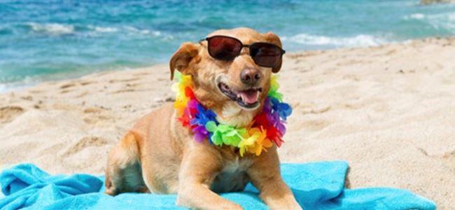 O plaja sadece köpekler girebilecek