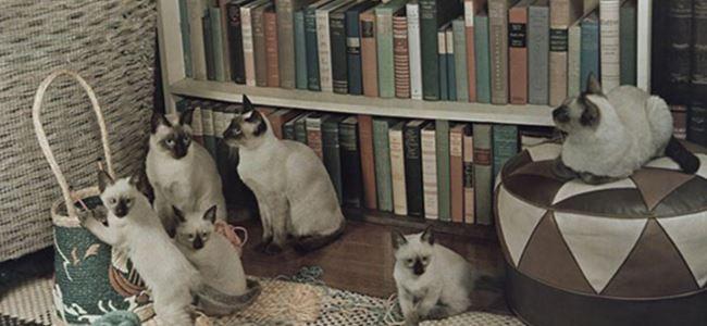 Kediler akrabalarını tanıyabiliyor mu?