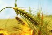 Tarım Sigorta Fonu'nun borçlandırılması reddedildi