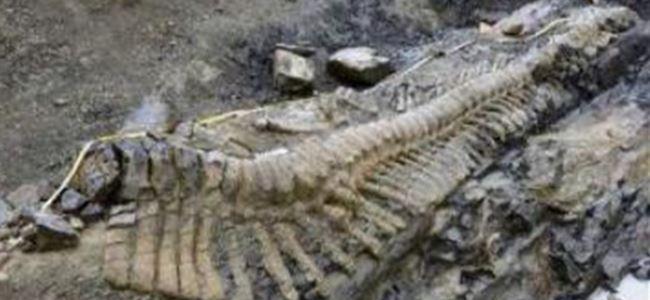 70 milyon yıllık dinazor kuyruğu fosili  bulundu