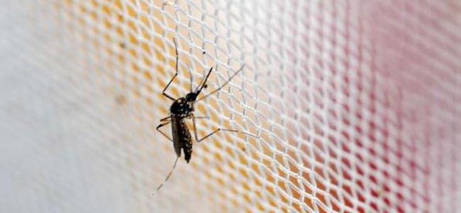 Çeklerde Zika alarmı