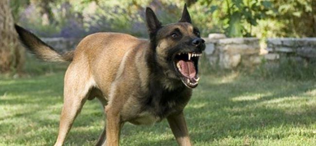 Orman yürüyüşü kabusa döndü: 15 köpek saldırdı