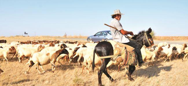 Doğaya aşık bir çoban