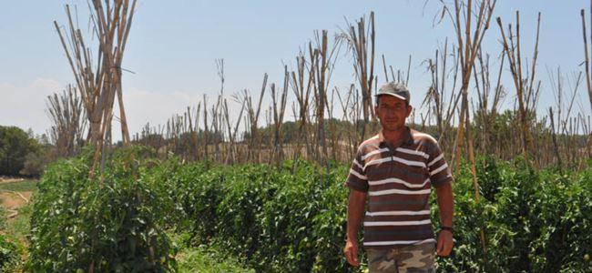 Sebze üreticileri dert küpü