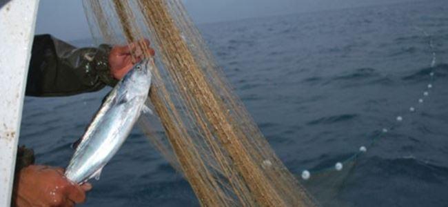 Tarım Bakanlığı'ndan balıkçılara flaş uyarı!