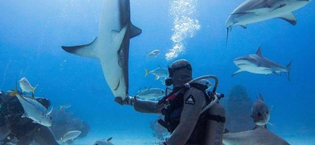 Köpekbalıklarının arasına daldı ve…