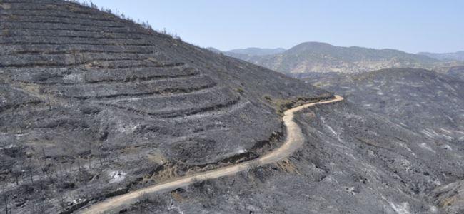 Yeşilırmak'ta yanan alan 452 hektar