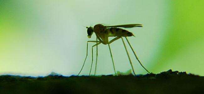 Batı Nil Virüsü, Sırbistan'da altı can aldı