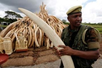 Afrika'da fil zirvesi