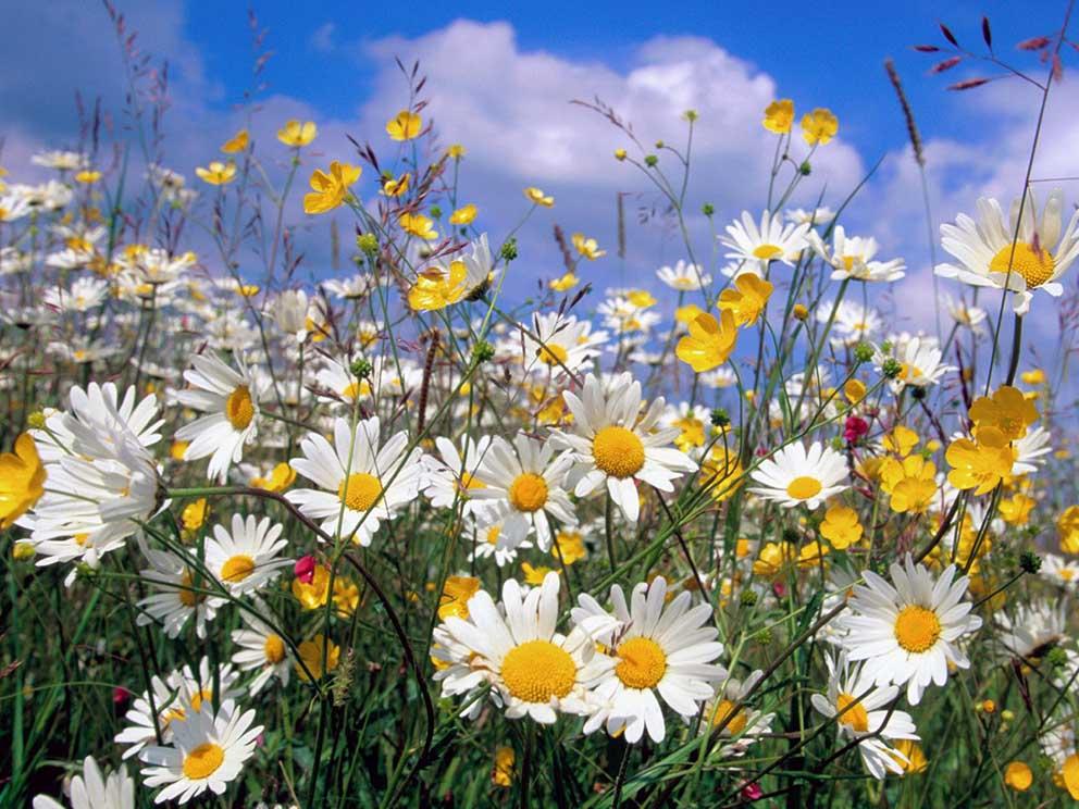 çiçekler dalında güzeldir