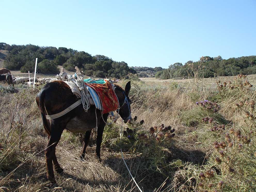 Photo of Bir ''özgürlük'' ve ''tutsaklık'' hikayesi: Kıbrıs eşekleri