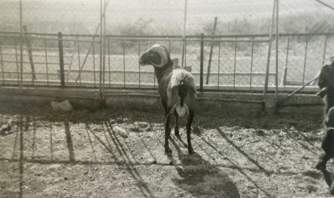 """Photo of """"Hadise kurbanı"""" talihsiz çiftlik: Margo"""