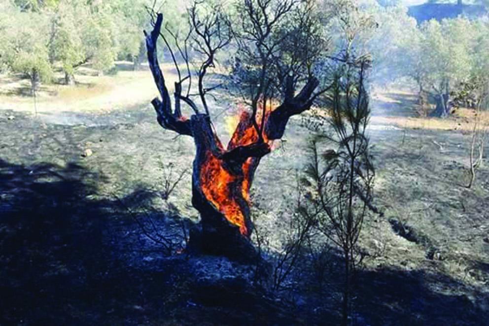 Photo of Anıt zeytinler cayır cayır yandı