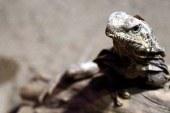 İklim değişikliği bazı türleri yok edebilir