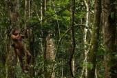 Maymun avcılarının sıradışı hayatı