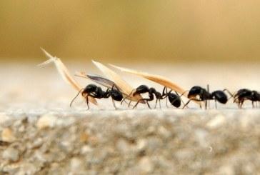 Karıncalarla ilgili müthiş keşif