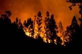 Ormanlık arazide yangın! 1 kişi tutuklandı…