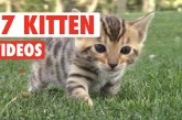 17 Funny Kitten Videos Compilation 2017