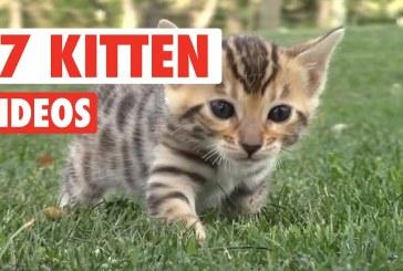 17 Funny Kitten Videos Compilation 2017