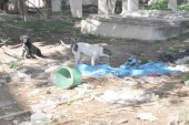 Mezarlık köpek yuvası oldu