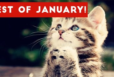 Funniest Pet Reactions & Bloopers of January 2017 | Funny Pet Videos