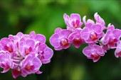 Orkide adası Kıbrıs