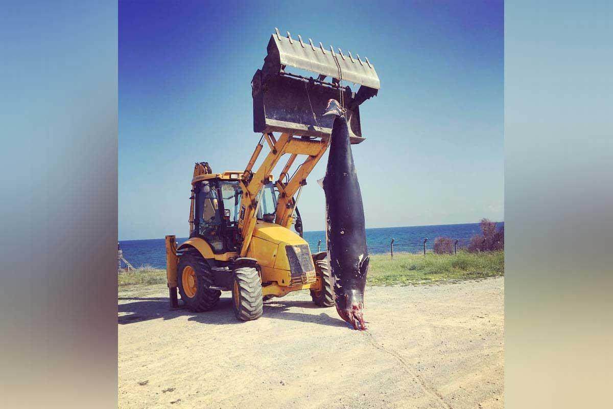Photo of Dev yunus Çatalköy'de sahile vurdu