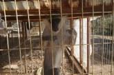 Maymunlar hayvan severlerle belediyeyi karşı karşıya bıraktı