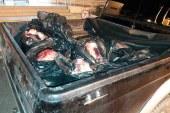 Kaçak etin ardı arkası kesilmiyor