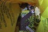Yavru kediyi çöpe attılar!