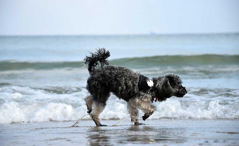 Photo of Kıbrıs'ta köpekler için plajlar hazır