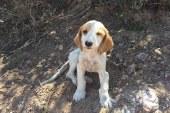Köpek sahiplerinin kalp ve damar hastalıklarından ölme riski 'daha az'