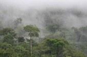 Amazon Ormanları yağışını kendisi başlatıyor