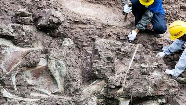 Photo of Fosil duvarından dinozor da çıktı