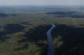 Amazon ormanları tehlikede