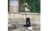 Bu sıcakta köpeği duvara bağlayıp gittiler